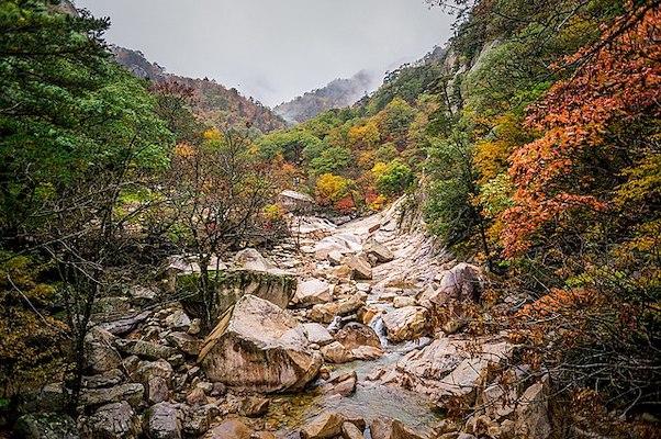 Korea Autumn Bucket List in park