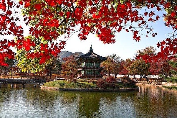 Fall Foliage at Gyeongbokung Palace in seoul