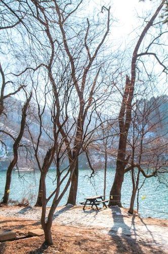 nami island in winters in south korea