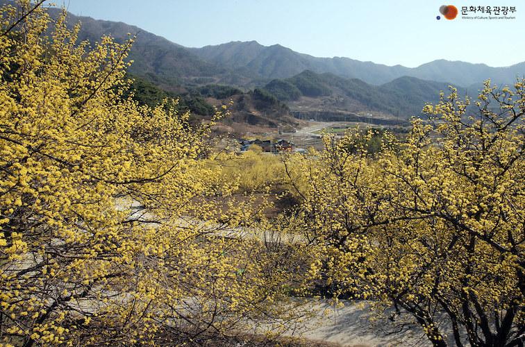 Gurye Sansuyu Village spring in Jeollanam-do