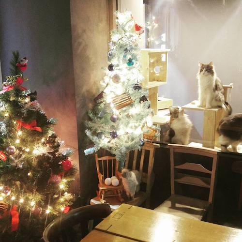 Cat Cafes in Seoul