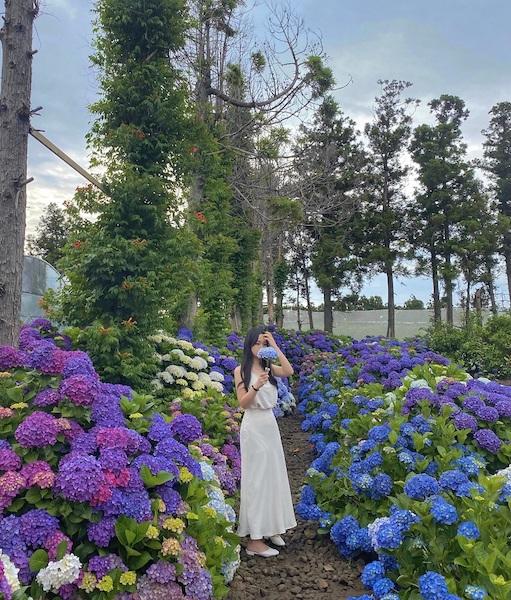 summer flowers korea