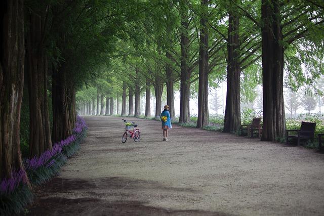 Metasequoia Road scenic drives korea