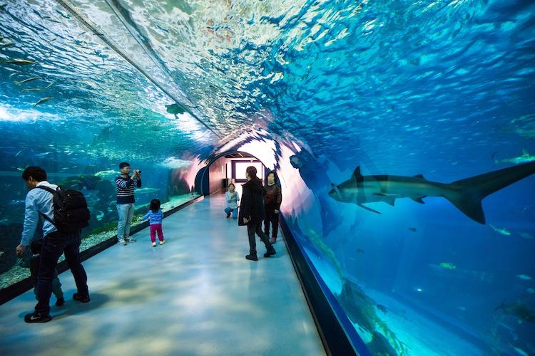 Aqua Planet Jeju (아쿠아플라넷 제주) aquariums in South Korea